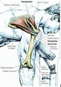 230 Best Images About Shoulder Pain  U0026 Neck Pain On