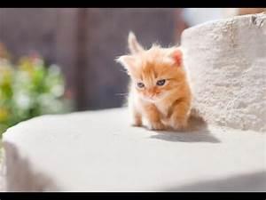 Cutest Munchkin Kittens Compilation - YouTube