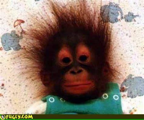monkey hairdo pictures