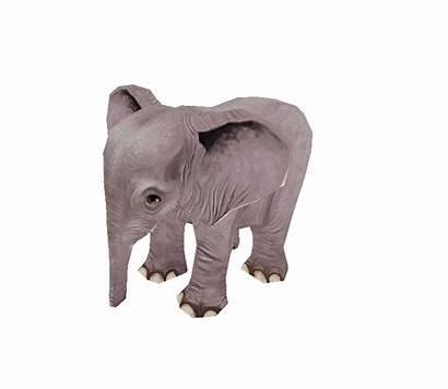 Zoo Animal Silhouette Tycoon Elephant African Animals