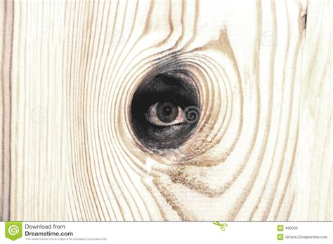 woods l eye wood eye stock illustration image of branch tree color