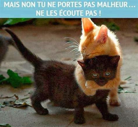 objet qui porte malheur citations option bonheur citation humoristique sur le chat noir qui porte malheur