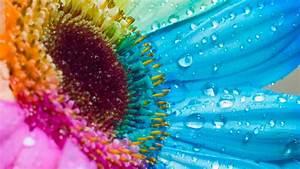 Wonderful Colorful Flowers HD Background Wallpaper ...