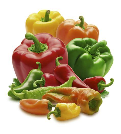 paprika z 252 chten 187 so gelingt die eigene z 252 chtung problemlos