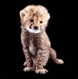 Cute Endangered Baby Animals