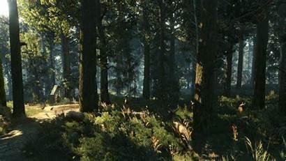 Forest Witcher Atmospheric Trailer Pc Reddit Wild