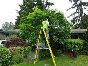 jd tree service tree pruning tree trimming serving seattle eastside including redmond