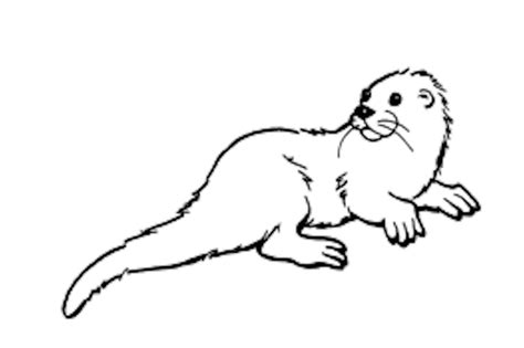 Coloring Page Otter Free Coloring Pages Of Otter