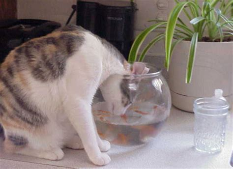Ringelkater - Witzige Katzen-Bilder