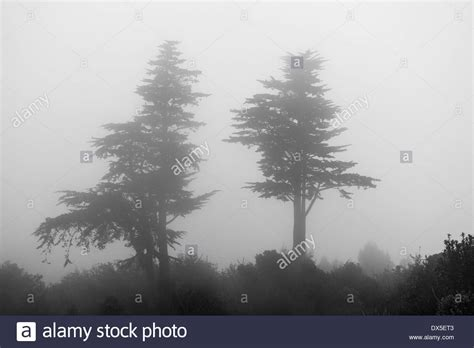 Fir Trees Silhouette Stock Photos & Fir Trees Silhouette