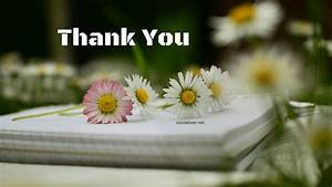 Download Thank You HD images for PPT, Whatsapp, Facebook ...