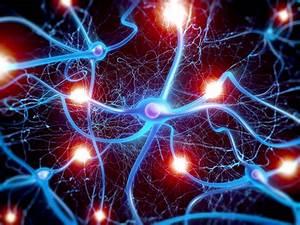 Epilepsy  Compound That Stops The Development Of Epilepsy