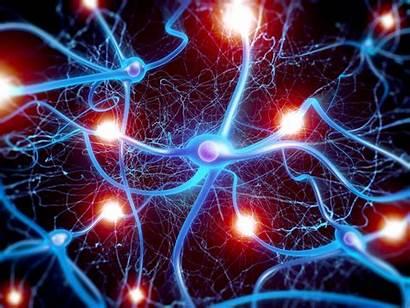 Brain Neurons Epilepsy Discovered Seizures Neuroscience Development
