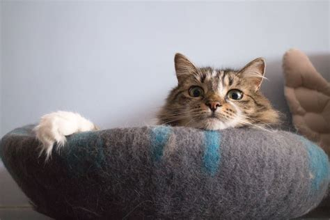 The Best Cat Bed Ever (seriously)  Comfycat Cat Cave