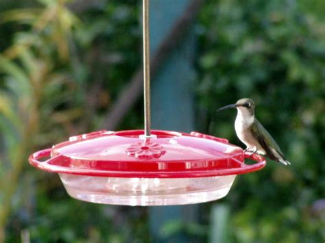 birds unlimited hummingbird feeder birds unlimited don t take your feeders on