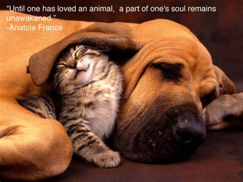 beautiful animal quotes quotesgram