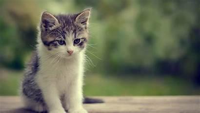 Cat Lovely Pixelstalk