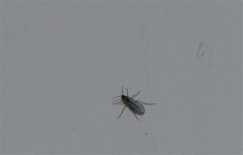 bei mir sind kleine fliegen im wohnzimmer woher kommen die insekten