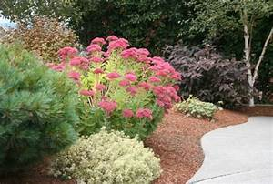 Garten Was Tun Im März : immer cool bleiben im garten hier sind unsere ratschl ge f r sie ~ Markanthonyermac.com Haus und Dekorationen