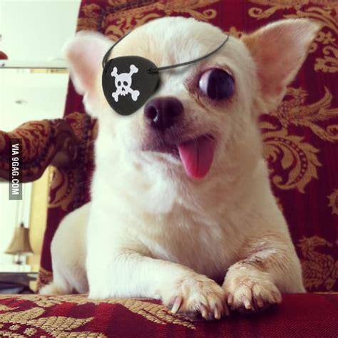 captain pirate 9gag