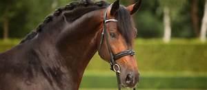 Bilder Zum Kaufen : grand prix pferde zum verkauf german horse center ~ Yasmunasinghe.com Haus und Dekorationen