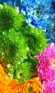 about us palm florist inc palatka fl