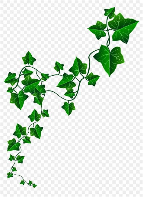 library   library ivy leaves png files clipart art