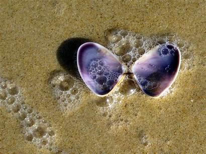 Purple Shell Clam Sand Close Beach Bubbles