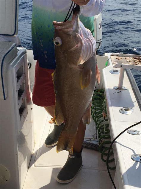 groupers cudjoe