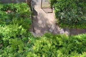 Farn Im Garten : farn garten 7 news von b rgerreportern zum thema ~ Orissabook.com Haus und Dekorationen