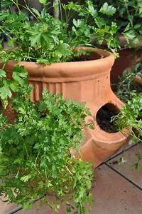 Plantes Grimpantes Pot Pour Terrasse : les plantes pour terrasse cultiver en pot marie claire ~ Premium-room.com Idées de Décoration