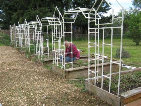 Trellises Constructed From Pvc Pipes