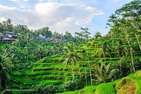 tripadvisor ubud private    ubud