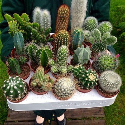 Mixed Premium Cactus Seeds, 100pcs/pack - GreenSeedGarden