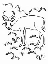 Coloring Pages Grassland Animals Printable Realistic Antelope Animal Grasslands Biome Gorilla Awesome Sheet Sketch Template Sheets Realisticcoloringpages Many Getcolorings Popular sketch template