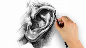 How to Draw Ears - Step by Step - YouTube