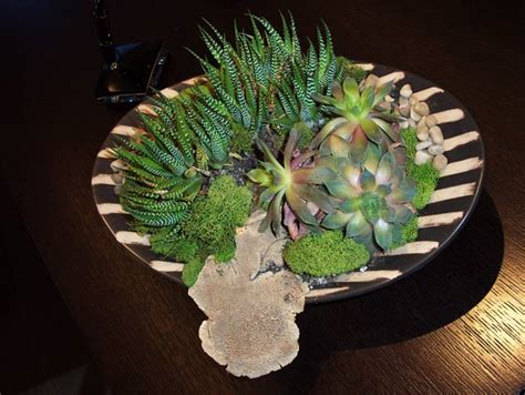 succulent design succulent plant design succulents for home office las vegas