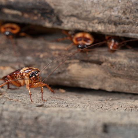 Pest Control Services in Illinois by Schopen Pest Solutions