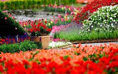 Colorful Flower Background Pixelstalk