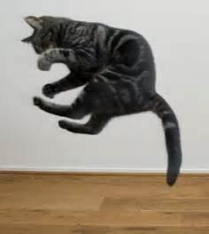 cat gymnastics gymnastics cat leap