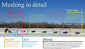 List of sled dog races - Wikipedia