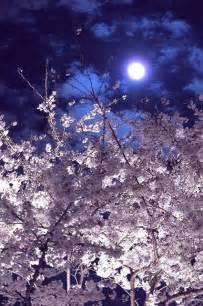 Tokyo Japan Full Moon