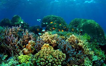 Underwater Ocean Fish Sea Fishes Nature Sealife
