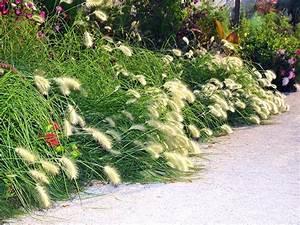 Gräser Zurückschneiden Frühjahr : gr ser grasarten ~ Lizthompson.info Haus und Dekorationen
