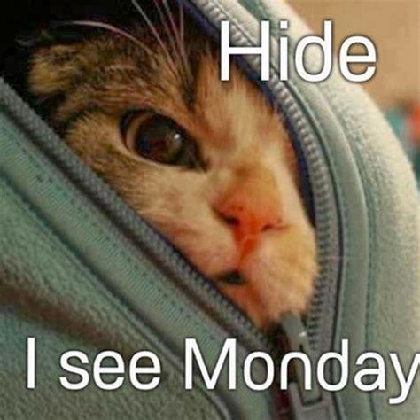 Monday Cat Meme - happy monday the master s table