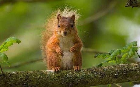 England's great wildlife experiences Telegraph