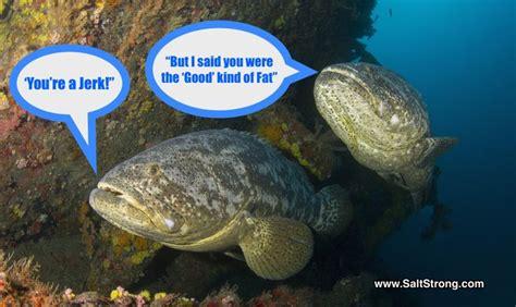 fishing funny grouper memes goliath dispute quotes domestic humor