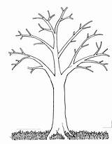 Coloring Pages Tree Bare Popular sketch template