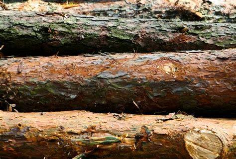 Nature Wood Log - Free Texture