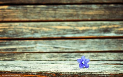 fond d 馗ran bureau tlcharger fond d 39 ecran fullscreen fleur fond macro fonds d 39 ecran gratuits pour votre rsolution du bureau 1920x1200 image 574949